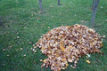 A pile of parasol tree leaves on the grass Stock Image