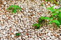 Pile of pebbles with plant background texture Stock Photography