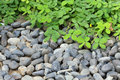Pile pebbles stone and green leaf Royalty Free Stock Photo