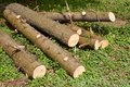 Pile of pine logs on green grass Royalty Free Stock Photo