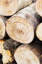 Pile of pine wood background texture Stock Photos