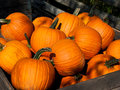 Pile of pumpkins Royalty Free Stock Image