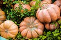 A Pile of Pumpkins Royalty Free Stock Photo