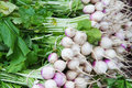 Pile of radishes with stalks Royalty Free Stock Photo