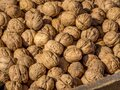 A pile of raw walnuts Royalty Free Stock Photo