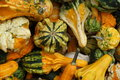 Pile of ripe squashes closeup different colored Stock Image