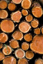 Pile of sawed young pine trees Royalty Free Stock Photo