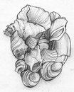 Pile of sea shells pencil sketch hand drawn a different Stock Image