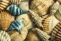 Sea shells. Blue with orange.