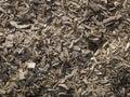 Sharp splinters of wood Royalty Free Stock Photo