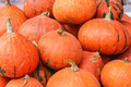 Pile of small pumpkins background Royalty Free Stock Photo