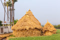 Pile of straw by product from rice field after collecting season Royalty Free Stock Images