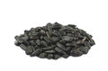 Pile of sunflowers seeds isolated Royalty Free Stock Photo