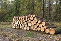 Pile of timber in the forest Royalty Free Stock Photos