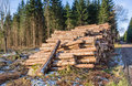 Pile of timber the woods at a clearcut Stock Images