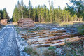 Pile of timber the woods at a clearcut area Stock Photo