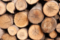 A pile of tree logs Royalty Free Stock Photo