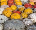 Pile of various pumpkins at harvest festival. background, vegetables. Royalty Free Stock Photo