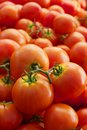 Pile of vined tomatoes green red ripe at the farmers market Royalty Free Stock Images