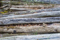 Pile of Weathered Log