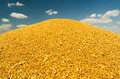 Pile Of Wheat Seeds During Har...