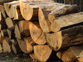 Pile of wood freshly cut tree logs piled up Royalty Free Stock Photos