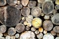 Pile of wood logs, stack of old tree trunks Royalty Free Stock Photo
