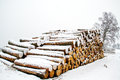 Pile of wood in snow stack pinetree stems Stock Images