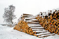 Pile of wood in snow stack pinetree stems Stock Photos