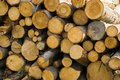 Pile of wood wooden natural fresh cutted logs Stock Photo