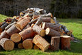 Pile of wooden logs Royalty Free Stock Photo