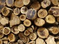 Pile of wooden logs stacked together