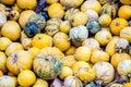 A pile of yellow pumpkins