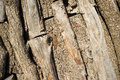 Piled logs background inside a traditional charcoal kiln Stock Photo