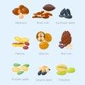 Piles of different nuts pistachio hazelnut almond peanut walnut tasty seed vector illustration