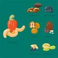 Piles of different nuts pistachio hazelnut almond walnut cashew chestnut tasty seed vector illustration