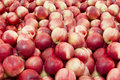 Piles of nectarines are stone fruit and grow on trees and are a bit like peaches without the fuzz in market Royalty Free Stock Photos