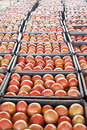 Piles of tomatoes Royalty Free Stock Photo