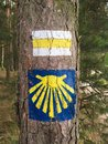 Pilgrim sign of the camino de santiago in poland with shell and tourist route on a tree a polish forest Stock Photography