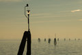 Pilings in the lagoon groups of of venice italy Stock Photos