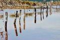 Pilings in Perspective: Lake Coogee, Western Australia Royalty Free Stock Photo