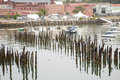 Pilings and sailboats in harbor seabirds on old wooden the bay at portland maine Stock Image