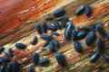 Pill Bugs Stock Photos