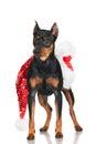 Pincher dog with santa hat black on white Royalty Free Stock Photos