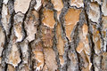 Pine Bark Background Landscape Royalty Free Stock Images