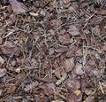 Pine bark. Royalty Free Stock Photo