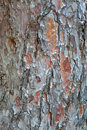 Pine bark texture Royalty Free Stock Images