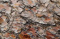 Pine bark texture of rough brown Royalty Free Stock Image