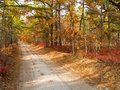 Pine Barrens Road Stock Photography