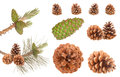 Pine branch cones Royalty Free Stock Photo